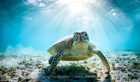 Underwater stock images Okinawa and overseas
