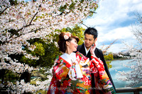 Kyoto Cherry Blossom special package